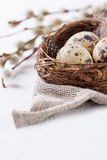Quail eggs in a nest with feathers on a bright background for Easter Royalty Free Stock Photography