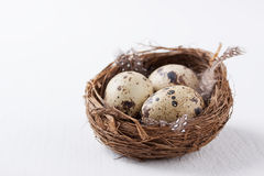 Quail eggs in a nest with feathers on a bright background for Easter Stock Photography