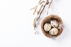Quail eggs in a nest with feathers and pussy willow branch on a white background for Easter. Quail eggs in a nest with feathers and pussy willow branch on a Stock Photos