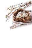 Quail eggs in a nest with feathers and willow branch on a white background for Easter Royalty Free Stock Images