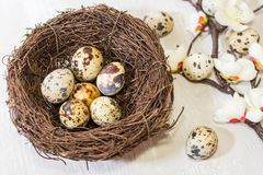 Quail eggs in the nest and a flowering branch. the view from the top. happy Easter card stock image