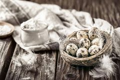 Quail eggs in a nest and glass bowl of flour on a rustic wooden. Quail eggs in a nest and glass bowl of flour on  rustic wooden background Royalty Free Stock Images