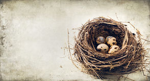 Quail eggs in the nest. On grunge background with place for text Stock Images
