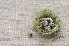 Quail eggs in a nest of hay on the background of flax Stock Image