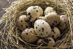 Quail eggs in a nest. Of hay on the table Royalty Free Stock Image