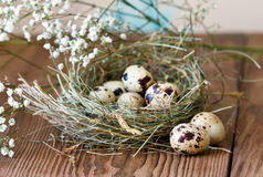 Quail eggs in nest of hay on wooden background Stock Photos