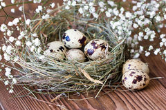 Quail eggs in nest of hay on wooden background Stock Photo