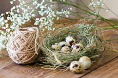 Quail eggs in nest of hay on wooden background Royalty Free Stock Photo