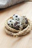 Quail eggs in the nest of hemp rope Stock Photos