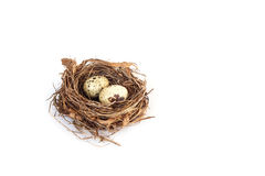 Quail eggs in the nest Royalty Free Stock Images