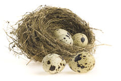 Quail eggs in nest Royalty Free Stock Photos