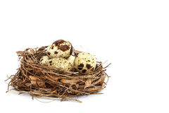 Quail eggs in the nest isolated on white Stock Images