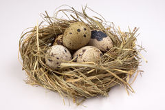 Quail eggs in nest  isolated on the white  background Stock Photography