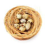 Quail eggs in nest Stock Photography