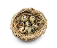 Quail eggs in a nest isolated on a white background Royalty Free Stock Photo