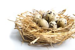 Quail eggs in a nest isolated on white background. Top view stock photo