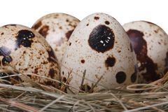 Quail eggs in a nest isolated on a white macro. Horizontal Stock Photos