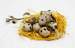 Quail eggs in nest. On a old white wooden background Royalty Free Stock Photos