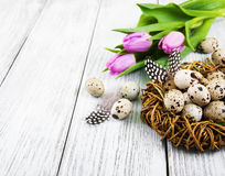 Quail eggs in nest Royalty Free Stock Image