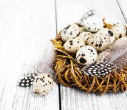 Quail eggs in nest Royalty Free Stock Photo