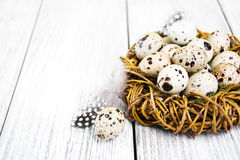 Quail eggs in nest Stock Photo