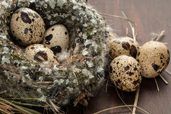 Quail eggs in a nest over old wooden background close-up Royalty Free Stock Images