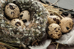 Quail eggs in a nest over old wooden background close-up Stock Images