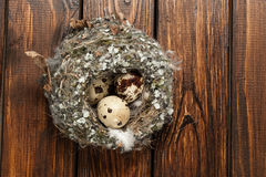 Quail eggs in a nest over old wooden background top view Stock Image