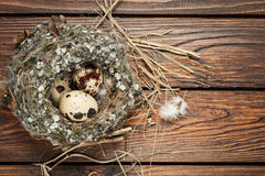Quail eggs in a nest over old wooden background top view Royalty Free Stock Photo