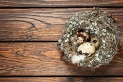 Quail eggs in a nest over old wooden background top view Stock Photos