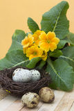 Quail eggs in the nest and the primrose Royalty Free Stock Photos