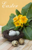 Quail eggs in the nest and the primrose Royalty Free Stock Images