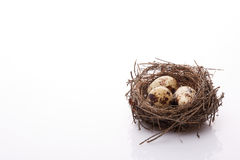 Quail eggs in a nest. Stock Photography