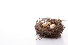 Quail eggs in a nest. Royalty Free Stock Photo