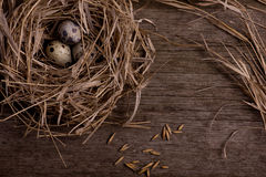 Quail eggs in nest on rustic straw wooden background Stock Image