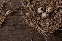 Quail eggs in nest on rustic straw wooden background Royalty Free Stock Photography