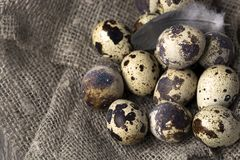 Quail eggs in a nest on a rustic wooden background. Healthy food concept.  Stock Photography