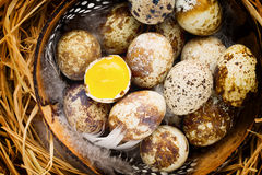 Quail eggs in the nest, a symbol of spring. Stock Photos