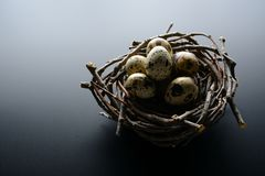 Quail eggs in nest of twigs on a black background. Easter background. Quail eggs in nest of twigs on a black background Royalty Free Stock Images