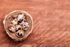 Quail eggs in the nest of a view from the top Royalty Free Stock Images