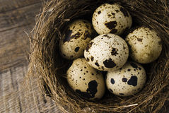 Quail eggs in nest Royalty Free Stock Photography