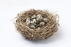 quail eggs in a nest royalty free stock images