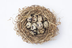 quail eggs in a nest royalty free stock photo