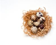 Quail eggs in nest on white background. Easter design royalty free stock images