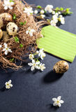 Quail eggs in nest with white flowers on textured black backgrou Stock Photos