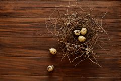 Quail eggs in a nest royalty free stock photos