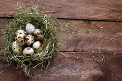 Quail eggs Royalty Free Stock Photo