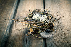 Quail eggs in nest Stock Photos