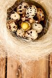 Quail eggs in the nest on wooden background with willow branch. Happy easter. Top view. Free space. Flat lay. Spring. Easter egg stock image