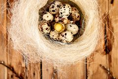 Quail eggs in the nest on wooden background with willow branch stock image